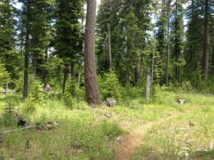 Forest view in the Metolius Preserve